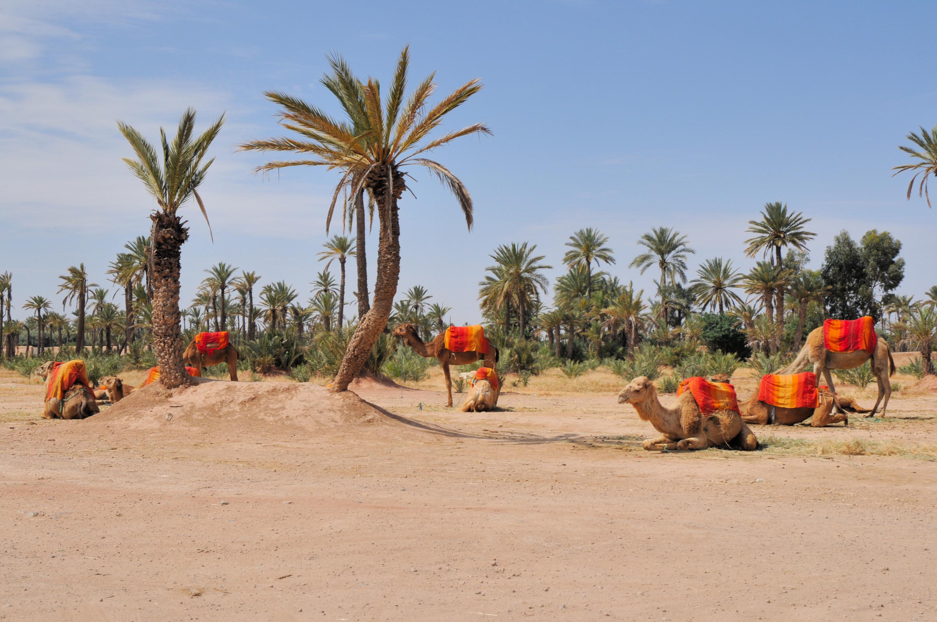 que ver en Marrakech en un día La Palmeraie