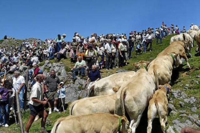 que ver en pamplona un domingo tributo tres vacas