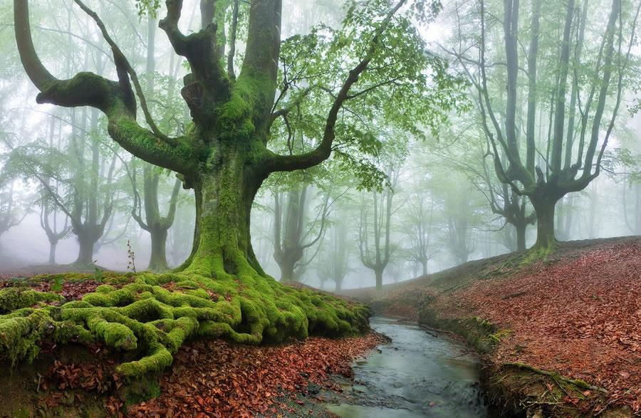 que ver en el pais vasco en 3 dias bosque