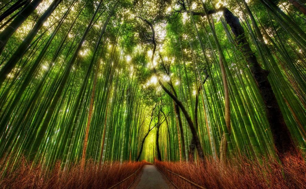 guia turistica japon