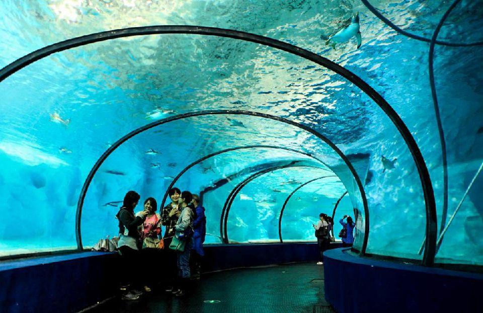 turismo en shanghai niños